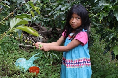 young coffee picker